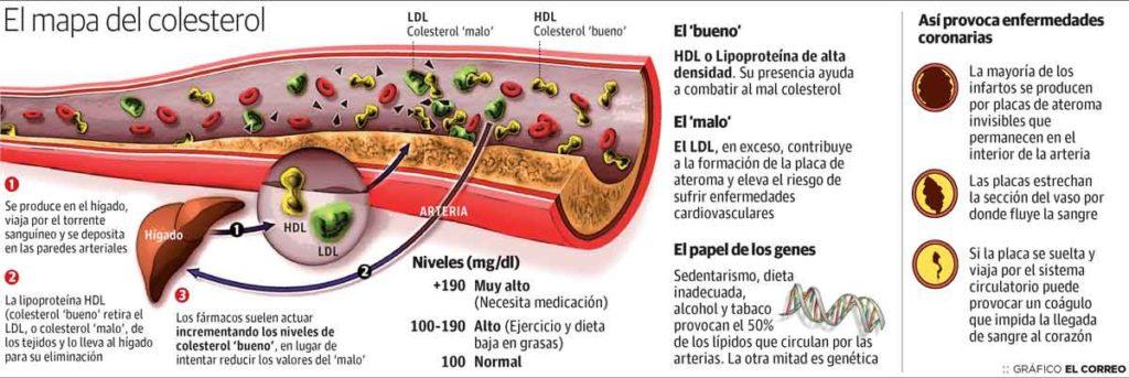 Figura 1. Consideraciones sobre el colesterol.