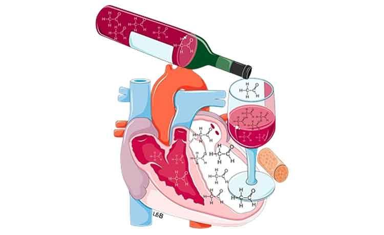 Figura 4. Si bebe vino con moderación, como máximo una copa para comer y otra para cenar.
